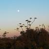 2010-08-22 Cayucos Beach 8 full moon