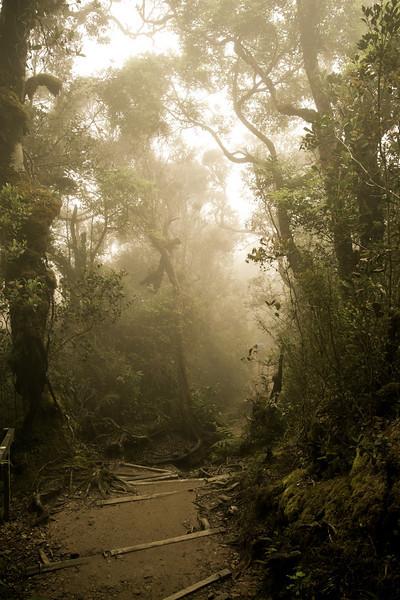 Kinabalu Park, Sabah.