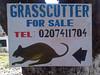 IMG Ghana Grasscutter LR