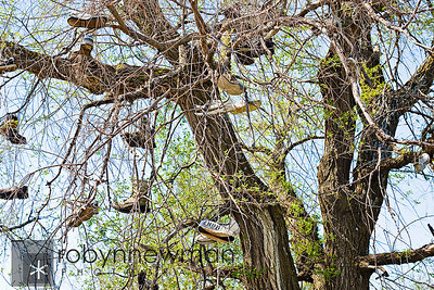 "Close up of all the shoes hanging from the ""Shoe Tree""."