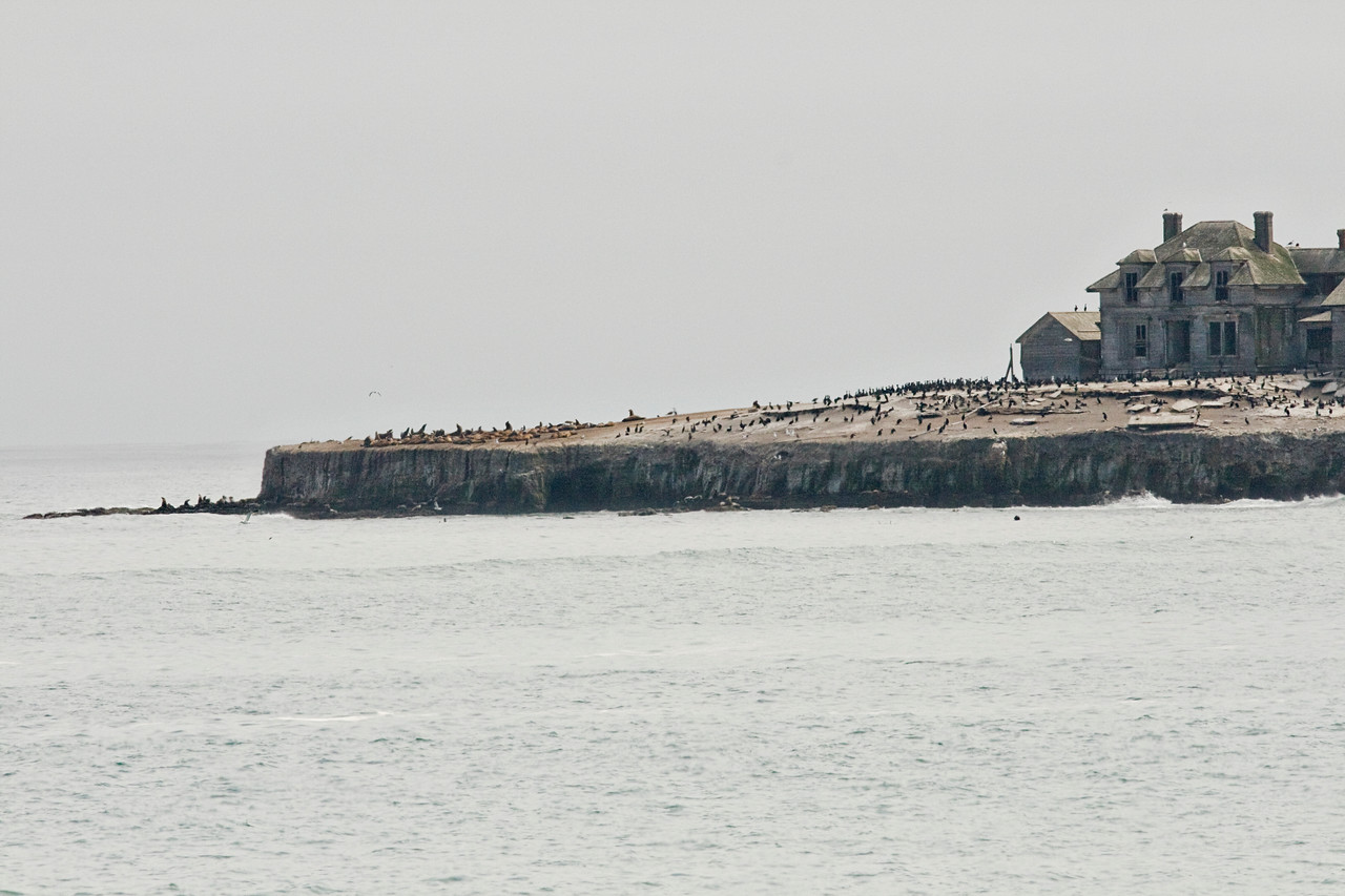 August 1, 2010 Ano Nuevo Island.