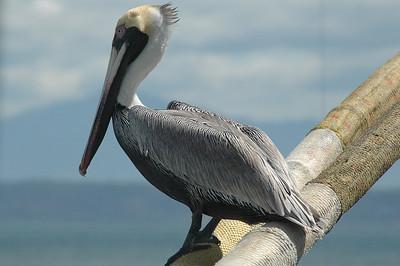 2010 Central America nature