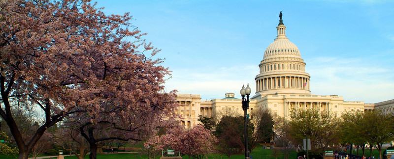 2010 DC Cherry Blossoms