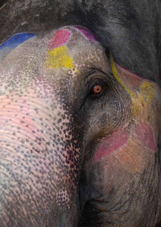 A closer look of the elephant.