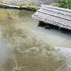 詩仙堂庭園內的池塘,鯉魚躲在屋簷下一動也不動,太冷了
