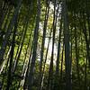 詩仙堂入口處的竹林