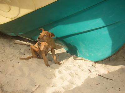 2010.01.02 Thalpe to Yala