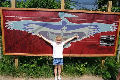 Maggie wingspan