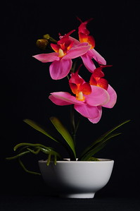 January 24, 2010 - Silk Orchid