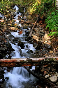 January 22, 2010 - Jumble of debris in Capitol Forest creek.
