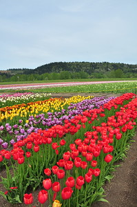 April 18, 2010 - Trip to Woodland, WA to the Holland America Tulip Festival.
