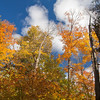 Varied canopy of the mixed Ontario forest.