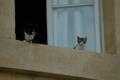 Cats watch from 2nd-story window. Avignon, Provence, France.