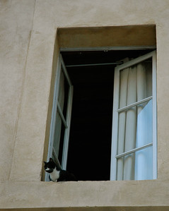 A cat watches from 2nd-story window. Avignon, Provence, France.
