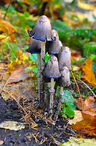 Mushrooms at our campsite at Battleground State Park near Vancouver, Washington.
