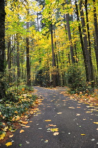 Fall leaves cover the road at Battleground State Park.