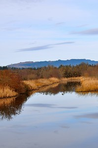 Mary E. Theler Wetlands Trail - Belfair, WA