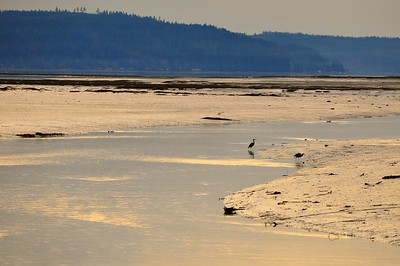 The estuary at Mary E. Theler Wetlands Trail - Belfair, WA