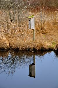 Mary E. Theler Wetlands Trail - Belfair, WA