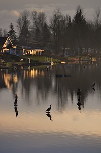 Black Lake February 7, 2010