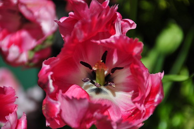 Butchart Gardens May 2010