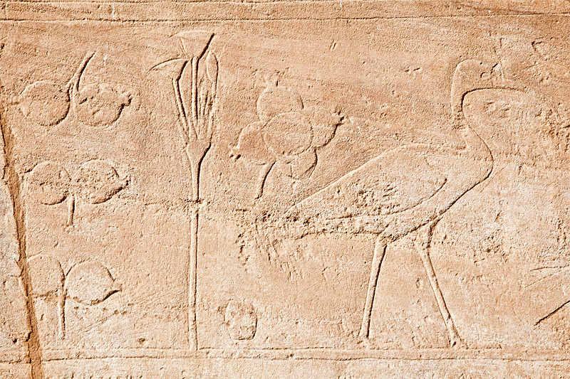 Karnak Temple, Luxor<br /> <br /> The relief above is from a roofless room known as the Botanic Garden room. On its walls are bas-reliefs of plants and animals discovered by Tuthmosis III during his travel to Syria.
