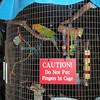 Tydeligvis noen sultne (eller sinte) papegøyer.