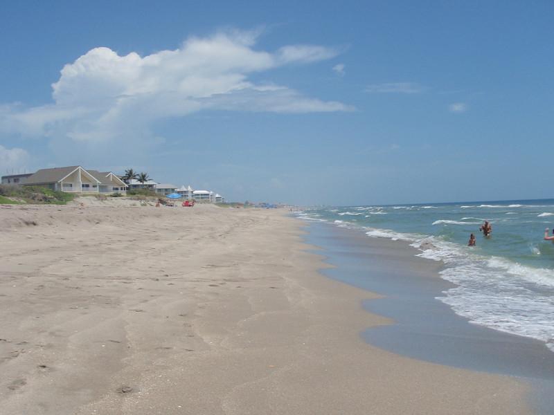 Strandliv ved Atlanterhavet.