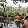 """Vi padler inn i en """"kanal"""" inn i mangrove-skogen. Her får vi et lite foredrag om de ulike dyrene som holder til her."""