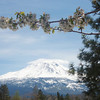 Mt Shasta and a blooming tree at the rest stop