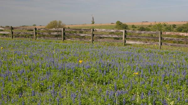 4* Spring Wildflowers in TX