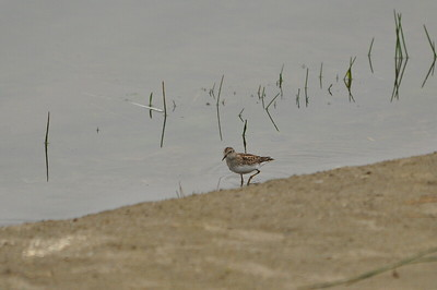 One lone shorebird.