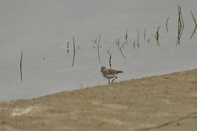 One lone shorebird.