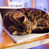 Our house cat, Clarence, asleep on my roommates' MacBook. - 1/25/2010