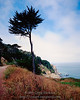 Tree, Land's End, San Francisco