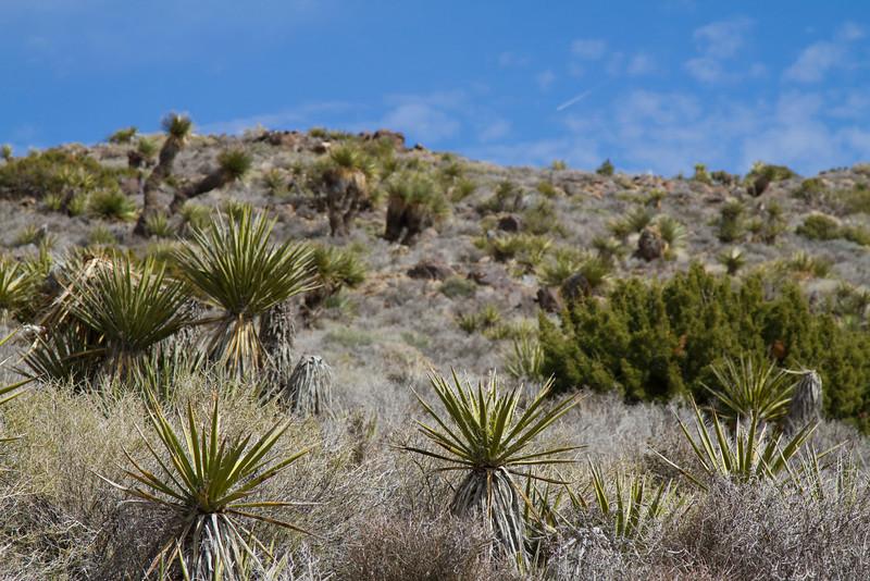 2011-03-02-desert-plants