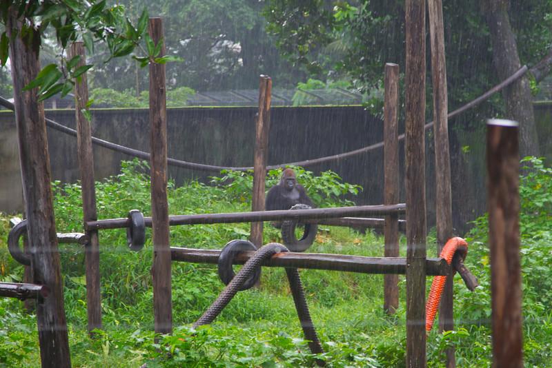 2011-07-03-Limbe-Animals