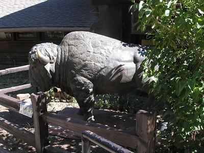 Scared stiff buffalo at Buffalo Bill's grave