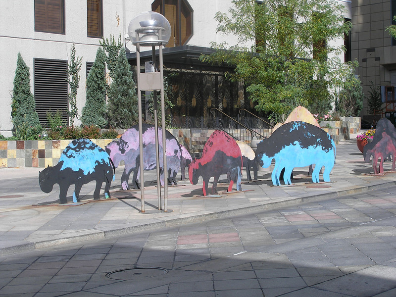 Buffalo roaming the 16th Street Mall