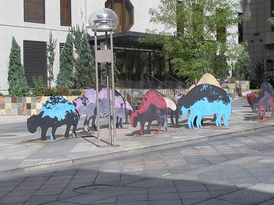 Buffalo roaming the 16th Street Mall