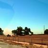 2011-08-19 San Joaquin Valley Corcoran area 1