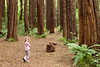 A short distance up Upper Ahu Ahu Road is Lucy's Gully, a part of Egmont National Park.  This grove of redwood trees was planted about a century ago.