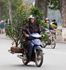 Everything from trees to animals is carried on the backs of motor bikes and scooters.