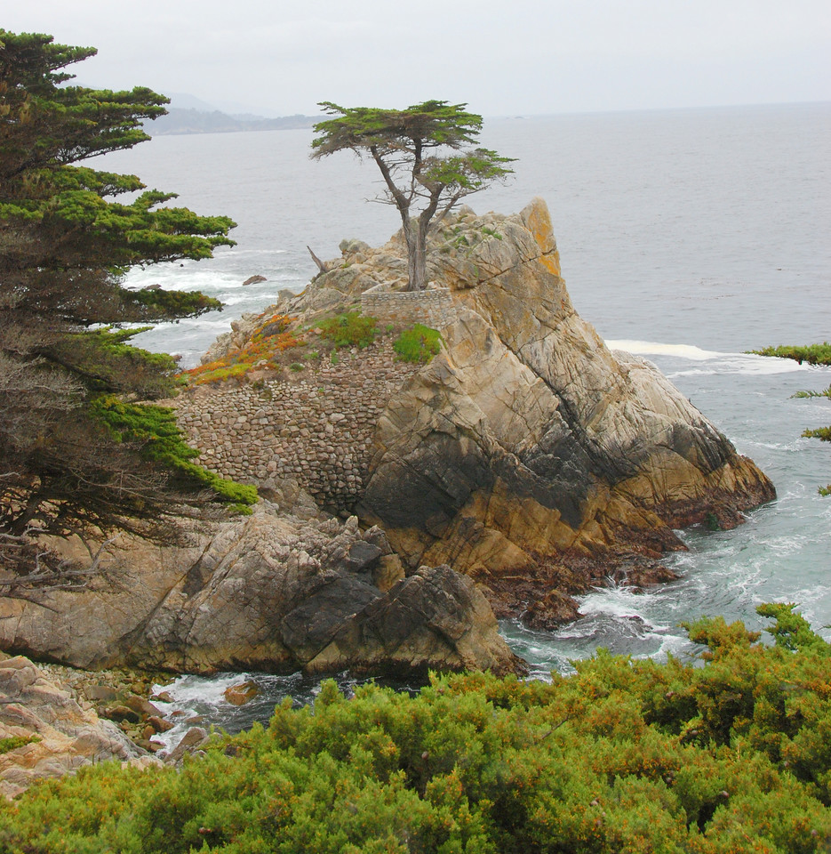 The most-photographed tree in America - the Lone Cypress - viewed from the 17-mile drive.