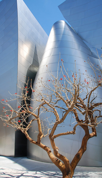 Tree in Disney Concert Hall courtyard.