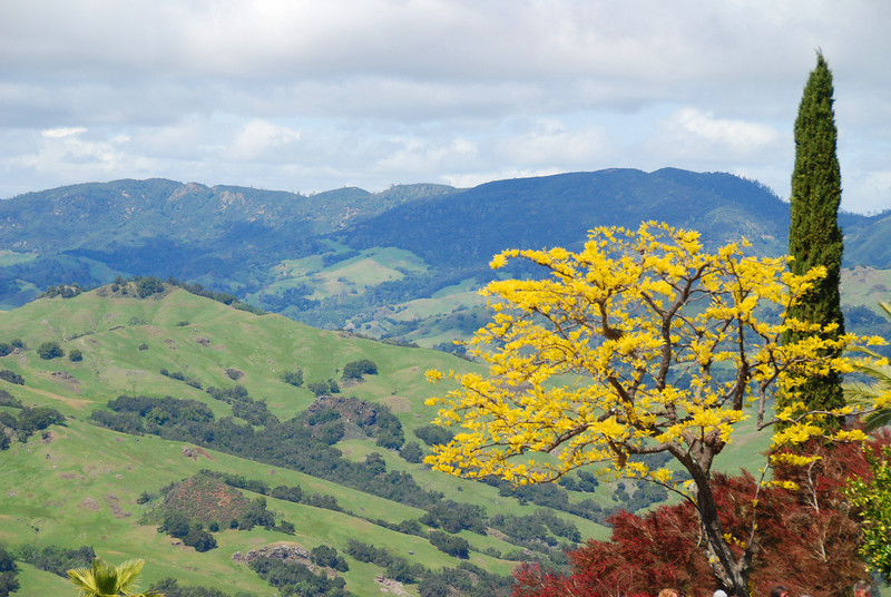 California hills, green in the spring.