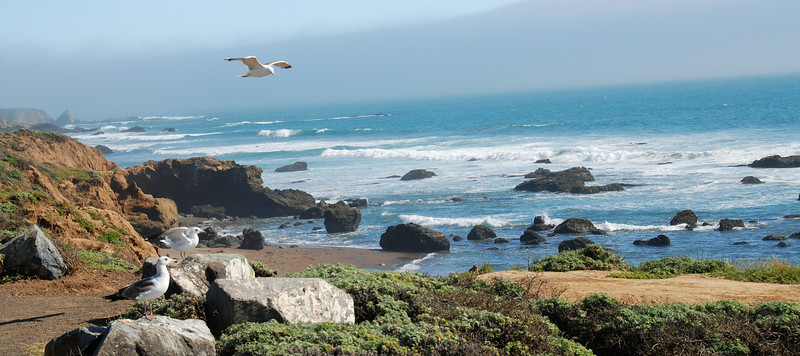 The coastline at San Simeon.
