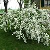 Beautiful flowers in Leo and Nanda's yard