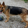 Bonnie (the watch dog?) at 14 months.