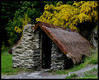 "Restored Chinese dwelling in Arrowtown.<br /> <br /> There was a gold rush near Queenstown in the late 1800s.  A number of Chinese came to work in the mines.  This buillding is part of  little village in which they lived.  A person 5' 2""  has to bend down to enter.  The shrubs with yellow blossoms are Gorse, one of many invasive plants in New Zealand.<br /> <br /> Arrowtown, NZ<br /> November 28, 2011<br /> 262"